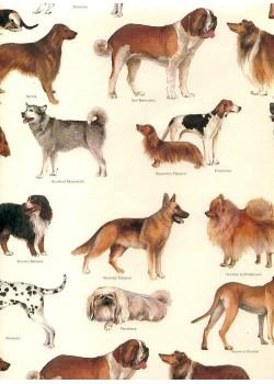 Races de chiens (70x100)