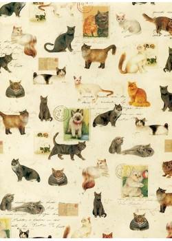Ecriture et race de chats (70x100)