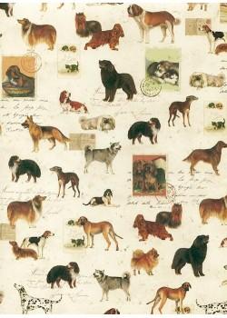 Ecriture et race de chiens (70x100)
