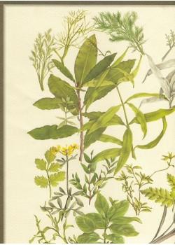 Les herbes et aromates (33x47)