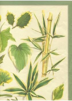 Les feuilles (33x47)