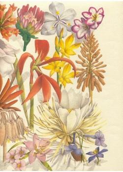 Les fleurs exotiques (33x47)