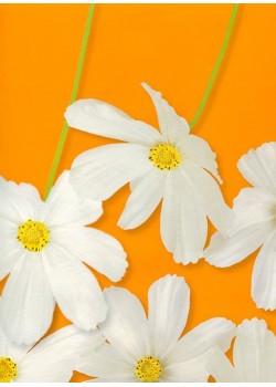 Fleur blanche fond orange (68x97)*