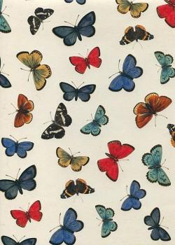 Planche de papillons (50x70)