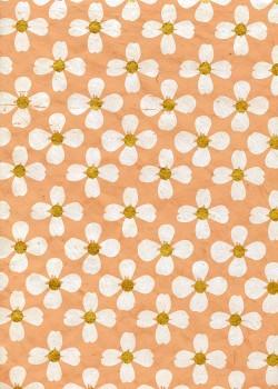 Lokta fleur blanche coeur or fond saumon (50x75)