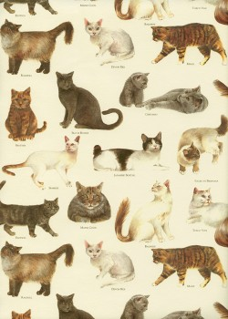 Races de chats (70x100)