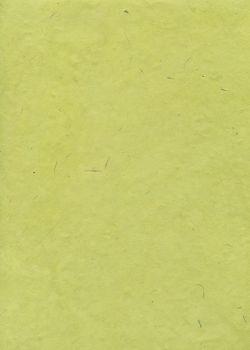Lokta vert tendre (50x75)