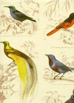 Les oiseaux colorés (70x100)