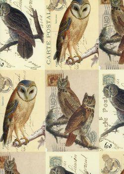 Cartes postales aux chouettes et hiboux (70x100)