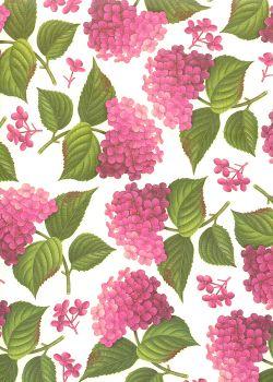 Hortensia rose (70x100)