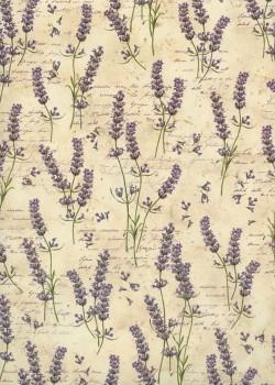 La lavande sur fond d'écritures (70x100)