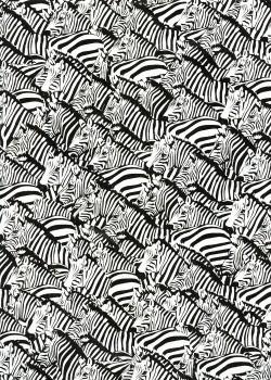 Les zebres (50x70)