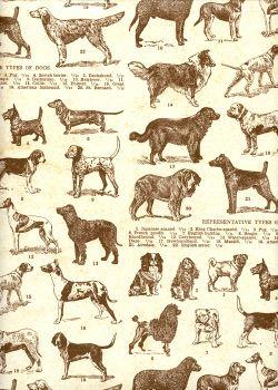 Les races canines (70x100)
