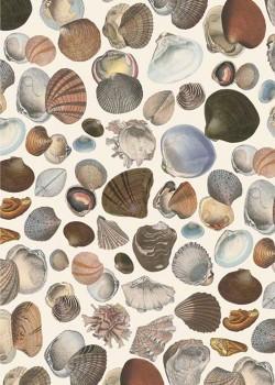 Les coquillages marron gris (70x100)