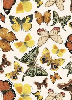 Papillons jaune roux (70x100)*