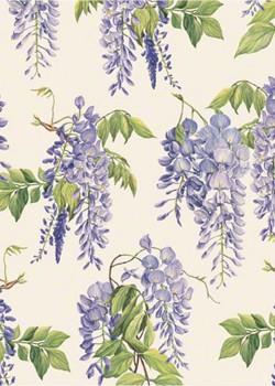 Glycine bleue (70x100)