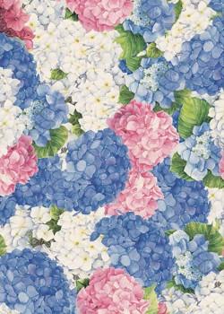 Hortensia rose/ bleu (70x100)