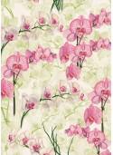 Orchidée rose (70x100)