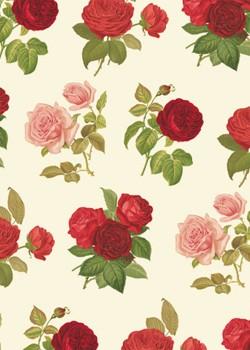 Rose redouté (70x100)