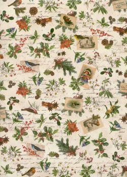 Oiseaux et fleurs de Noël (70x100)