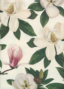 Fleurs de magnolia (70x100)