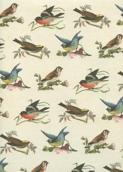 Planche d'oiseaux (50x70)