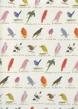 L'encyclopédie des oiseaux (50x70)