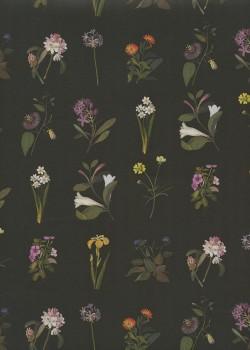 Herbier fond noir (50x70)