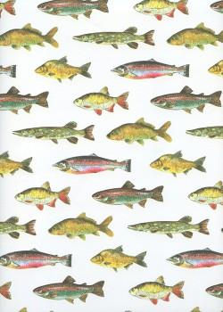 Planche de poissons (50x70)