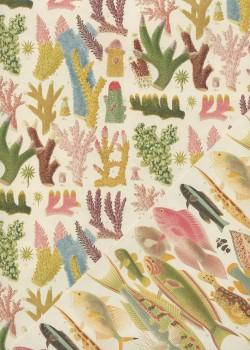 """Recto verso """"Barrière de corail / planche de poissons"""" (50x70)"""