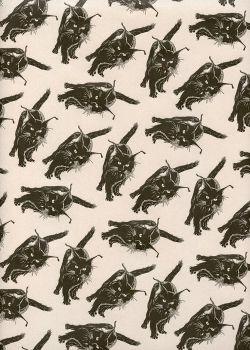 Les chats noirs fond naturel (50x70)