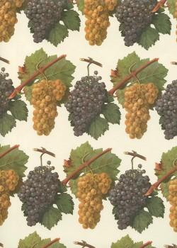 Les grappes de raisin (70x100)