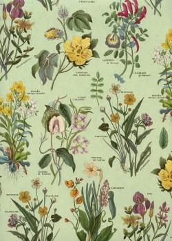 Planche botanique fond vert tendre (70x100)